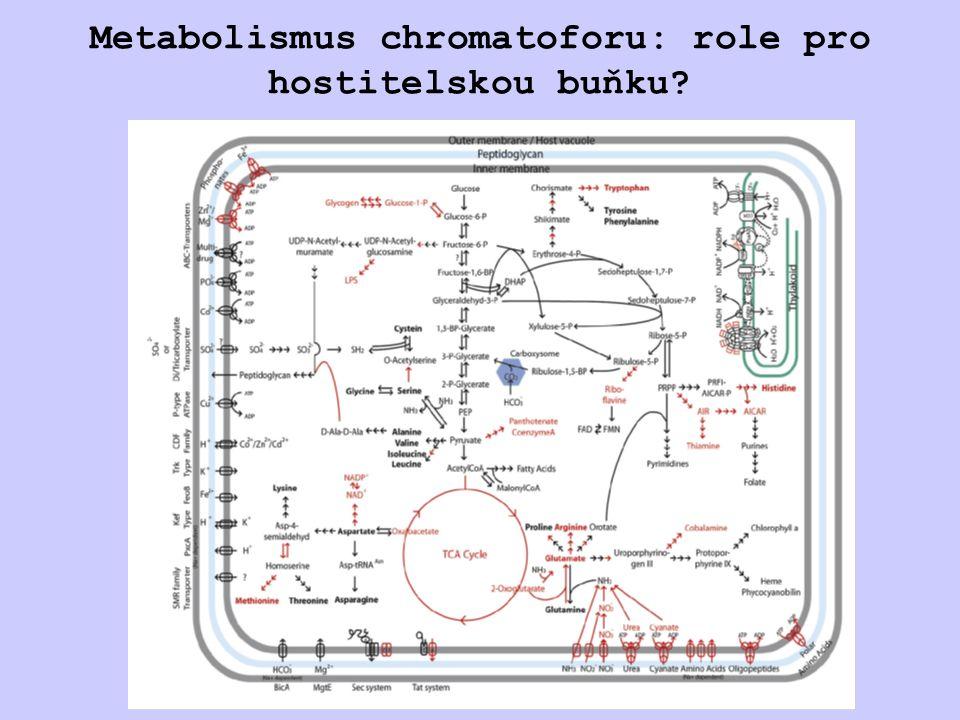 Chemolitotrofní endosymbiosa Calyptogena magnifica bakteriocyt obsahující endosymbionty Candidatus Ruthia magnifica Genom Candidatus Ruthia magnifica (  -proteobacteria): 1,2 Mbp, 976 genů Newton et al., 2007