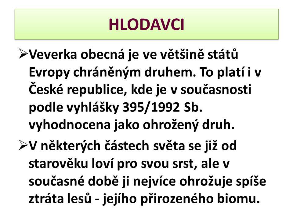 HLODAVCI  Veverka obecná je ve většině států Evropy chráněným druhem. To platí i v České republice, kde je v současnosti podle vyhlášky 395/1992 Sb.