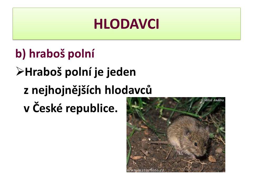 b) hraboš polní  Hraboš polní je jeden z nejhojnějších hlodavců v České republice.