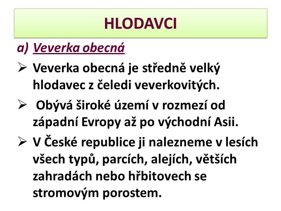 HLODAVCI a)Veverka obecná  Veverka obecná je středně velký hlodavec z čeledi veverkovitých.  Obývá široké území v rozmezí od západní Evropy až po vý