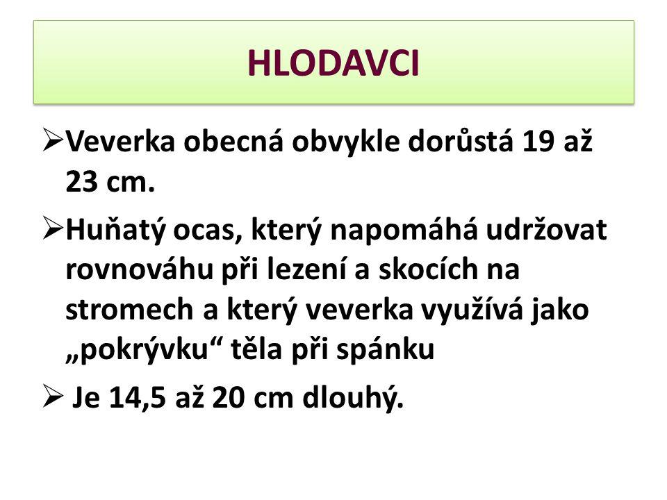 HLODAVCI  Veverka obecná obvykle dorůstá 19 až 23 cm.  Huňatý ocas, který napomáhá udržovat rovnováhu při lezení a skocích na stromech a který vever