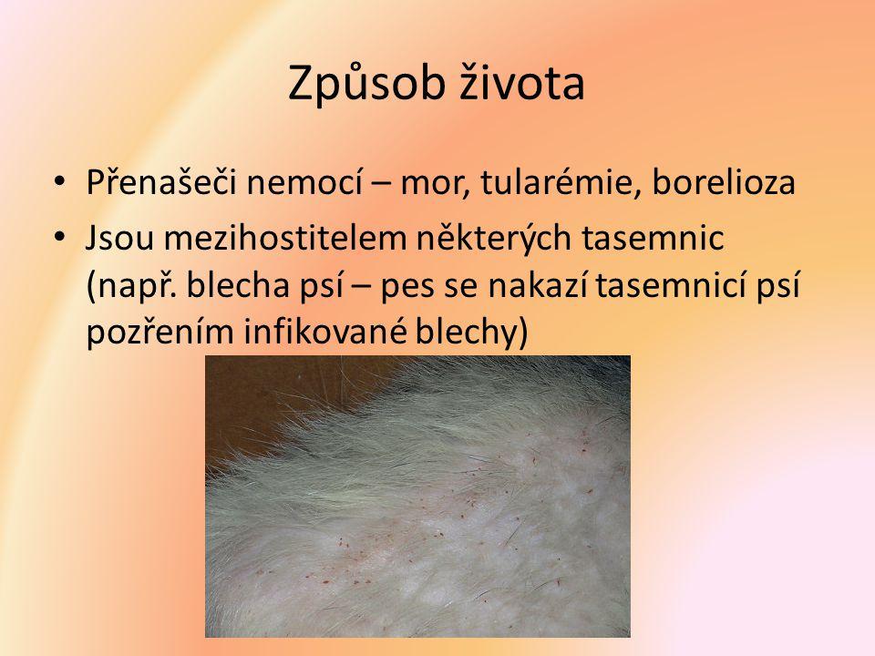 Způsob života Přenašeči nemocí – mor, tularémie, borelioza Jsou mezihostitelem některých tasemnic (např. blecha psí – pes se nakazí tasemnicí psí pozř