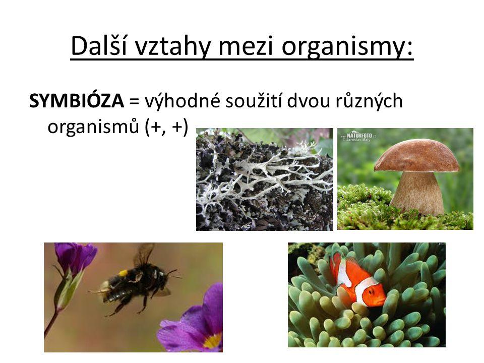 VZTAHY MEZI ORGANISMY POTRAVNÍ VZTAHY producenti- zelené rostliny a sinice, produkují(=vytvářejí) živiny konzumenti- živočichové, konzumují ( přijímají) živiny v potravě rostlin nebo jiných živočichů rozkladači- houby a bakterie, rozkládají těla uhynulých konzumentů a producentů na jednoduché látky POTRAVNÍ ŘETĚZEC- závislost, kdy jeden organismus je zdrojem energie pro druhý organismus (nakreslete si příklad potravního řetězce) POTRAVNÍ PYRAMIDA- grafické vyjádření potravní závislosti a zastoupení jednotlivých skupin na zemi (překreslete si potr.