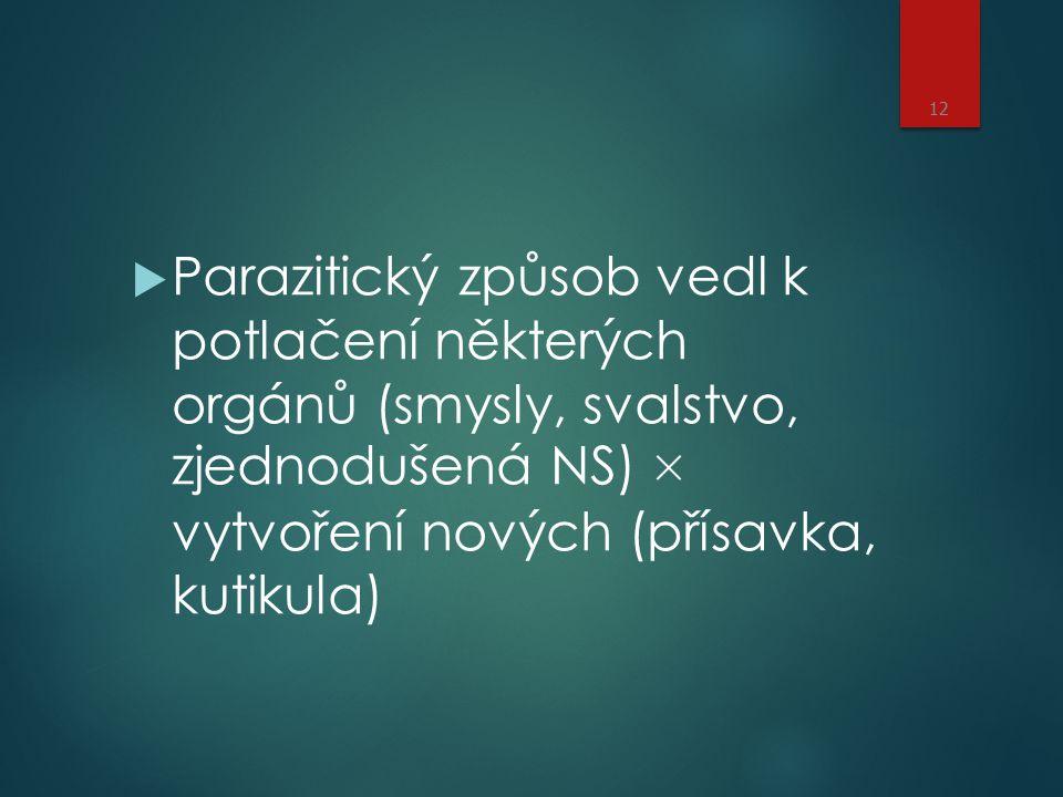  Parazitický způsob vedl k potlačení některých orgánů (smysly, svalstvo, zjednodušená NS) × vytvoření nových (přísavka, kutikula) 12