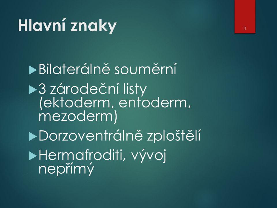 Hlavní znaky  Bilaterálně souměrní  3 zárodeční listy (ektoderm, entoderm, mezoderm)  Dorzoventrálně zploštělí  Hermafroditi, vývoj nepřímý 3