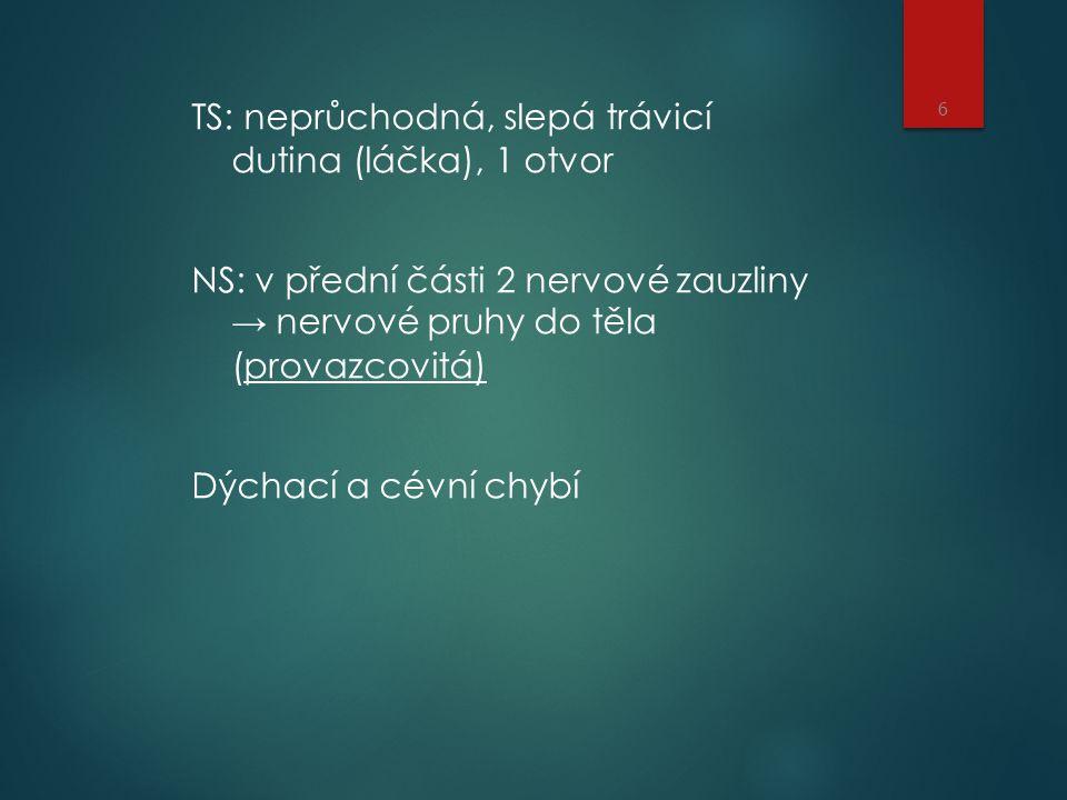 TS: neprůchodná, slepá trávicí dutina (láčka), 1 otvor NS: v přední části 2 nervové zauzliny → nervové pruhy do těla (provazcovitá) Dýchací a cévní chybí 6