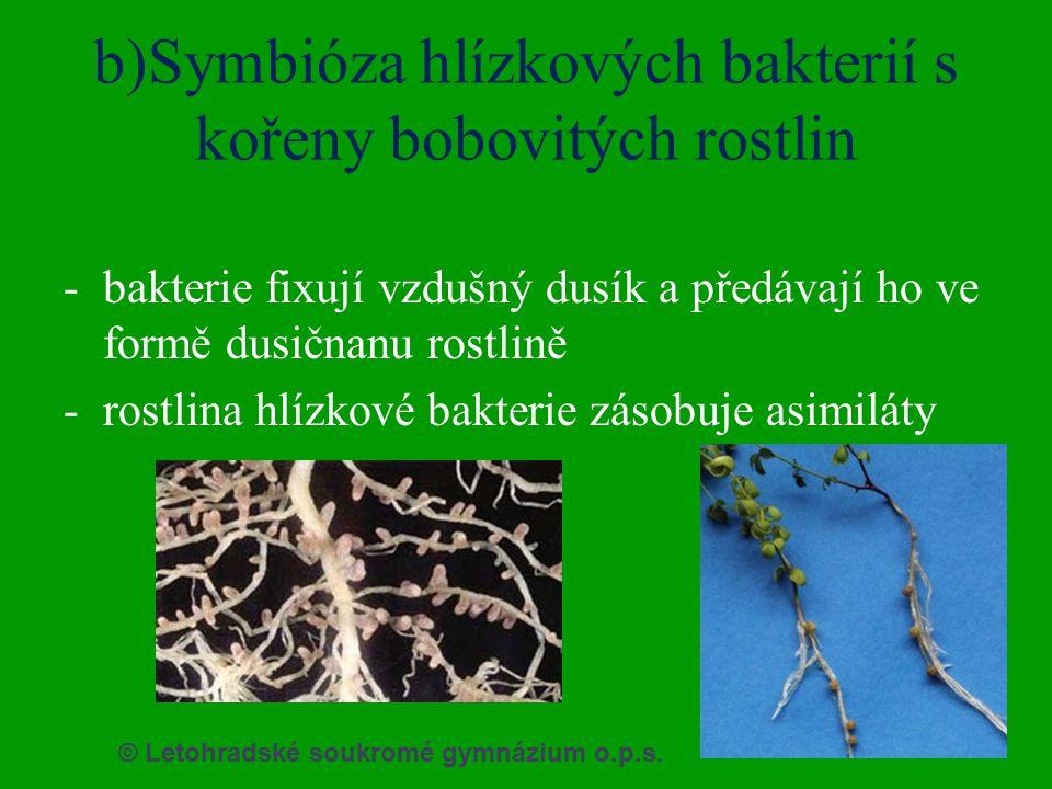 b)Symbióza hlízkových bakterií s kořeny bobovitých rostlin -bakterie fixují vzdušný dusík a předávají ho ve formě dusičnanu rostlině -rostlina hlízkov