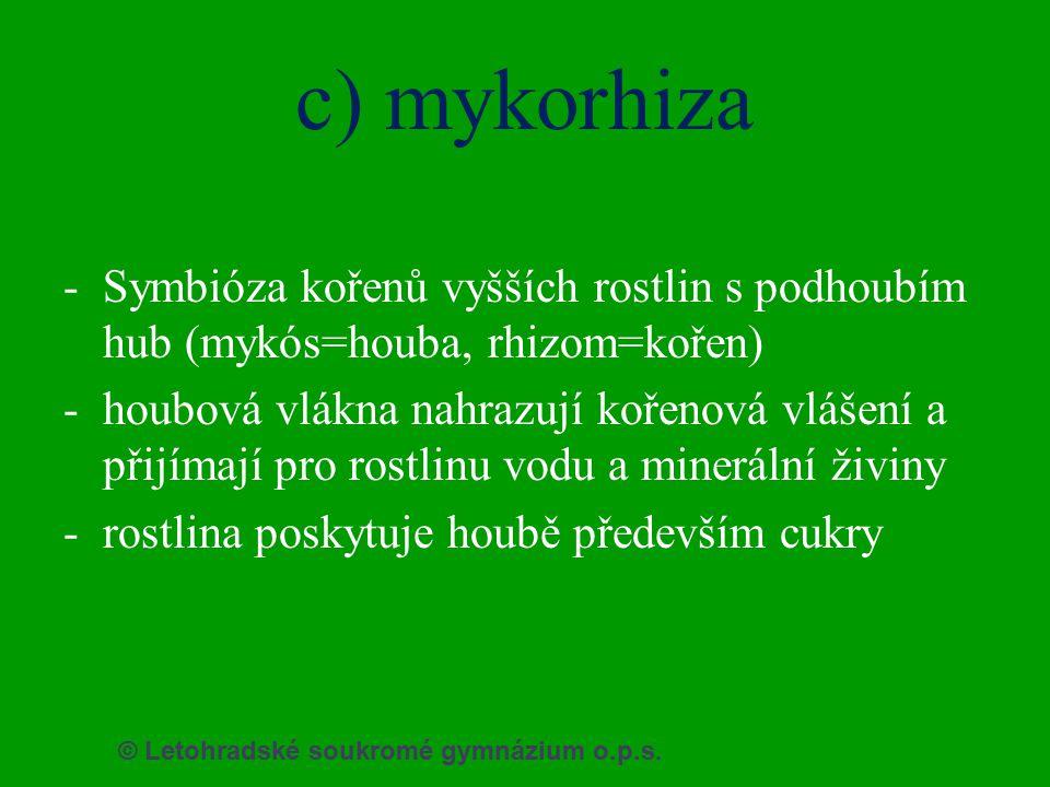 © Letohradské soukromé gymnázium o.p.s. c) mykorhiza -Symbióza kořenů vyšších rostlin s podhoubím hub (mykós=houba, rhizom=kořen) -houbová vlákna nahr