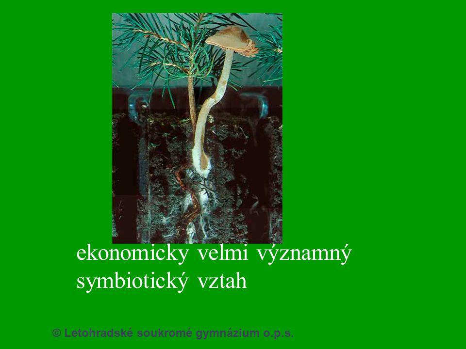 © Letohradské soukromé gymnázium o.p.s. ekonomicky velmi významný symbiotický vztah