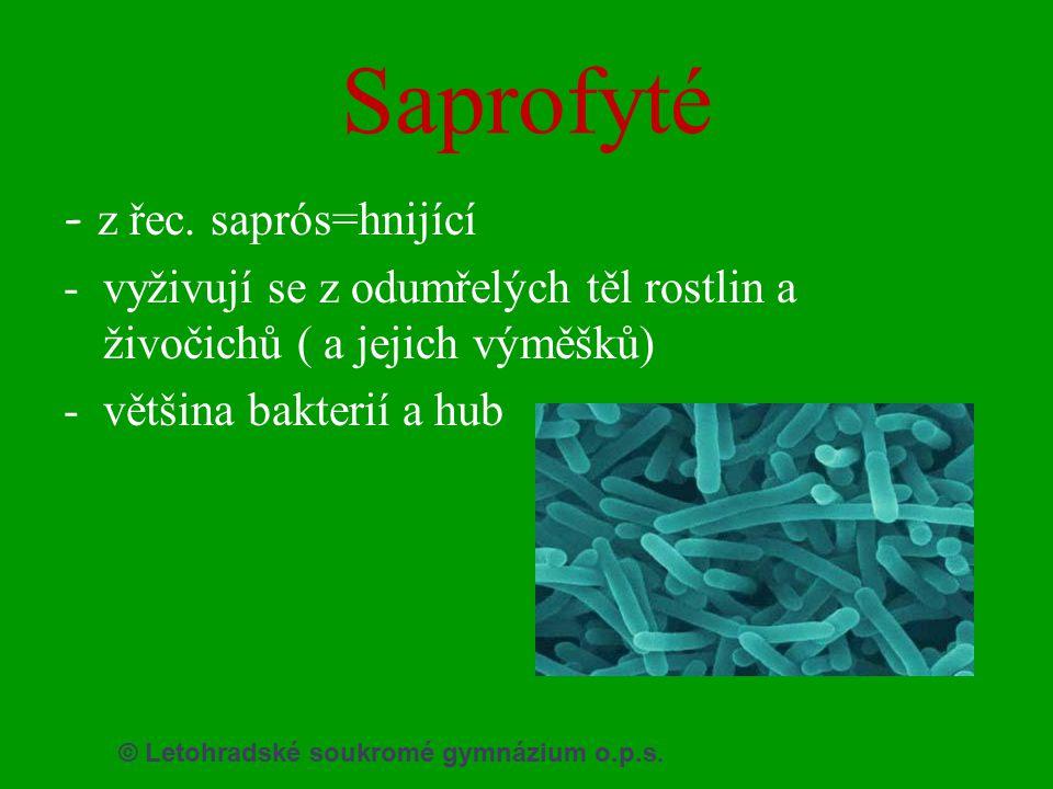 © Letohradské soukromé gymnázium o.p.s. Saprofyté - z řec. saprós=hnijící -vyživují se z odumřelých těl rostlin a živočichů ( a jejich výměšků) -větši