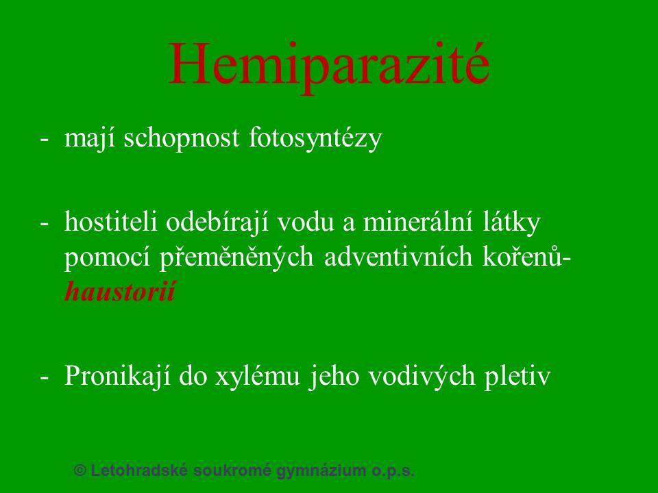 © Letohradské soukromé gymnázium o.p.s. Hemiparazité -mají schopnost fotosyntézy -hostiteli odebírají vodu a minerální látky pomocí přeměněných advent