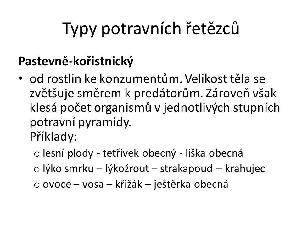 Typy potravních řetězců Pastevně-kořistnický od rostlin ke konzumentům.
