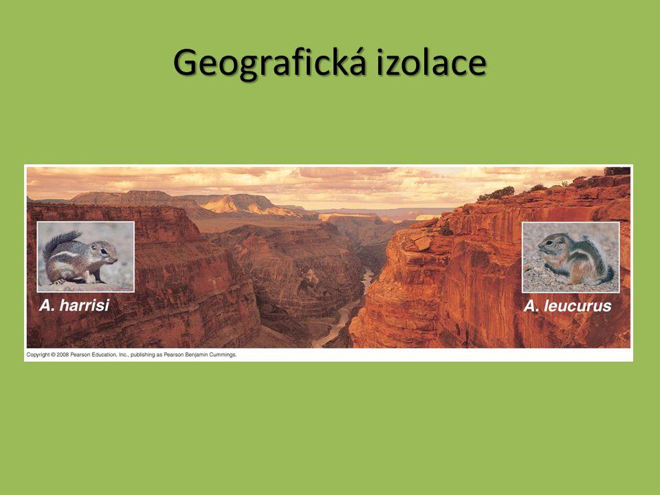 Geografická izolace