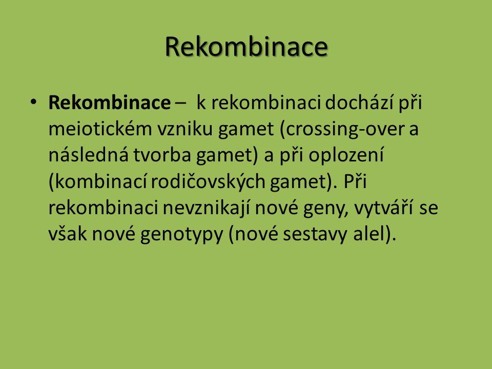 Rekombinace Rekombinace – k rekombinaci dochází při meiotickém vzniku gamet (crossing-over a následná tvorba gamet) a při oplození (kombinací rodičovs