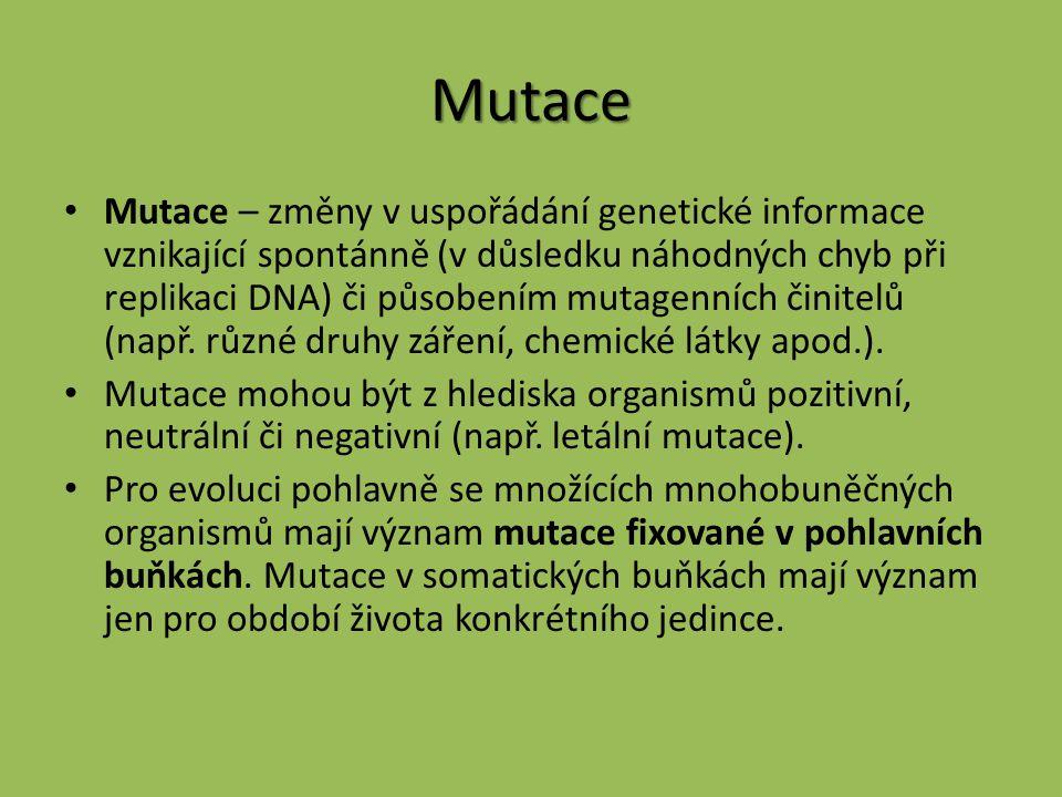 Mutace Mutace – změny v uspořádání genetické informace vznikající spontánně (v důsledku náhodných chyb při replikaci DNA) či působením mutagenních čin