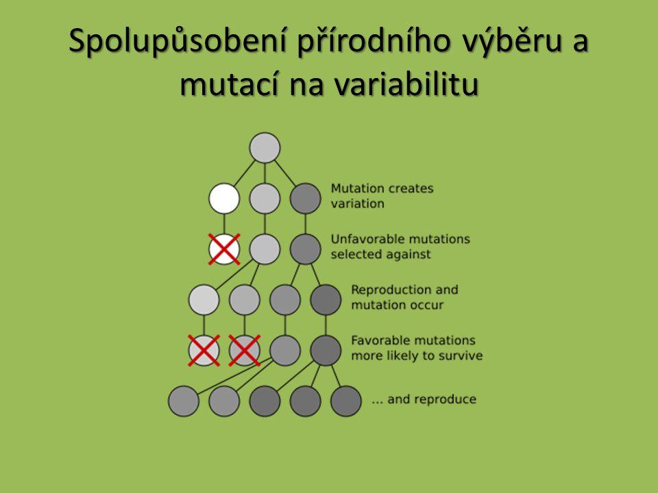 Spolupůsobení přírodního výběru a mutací na variabilitu