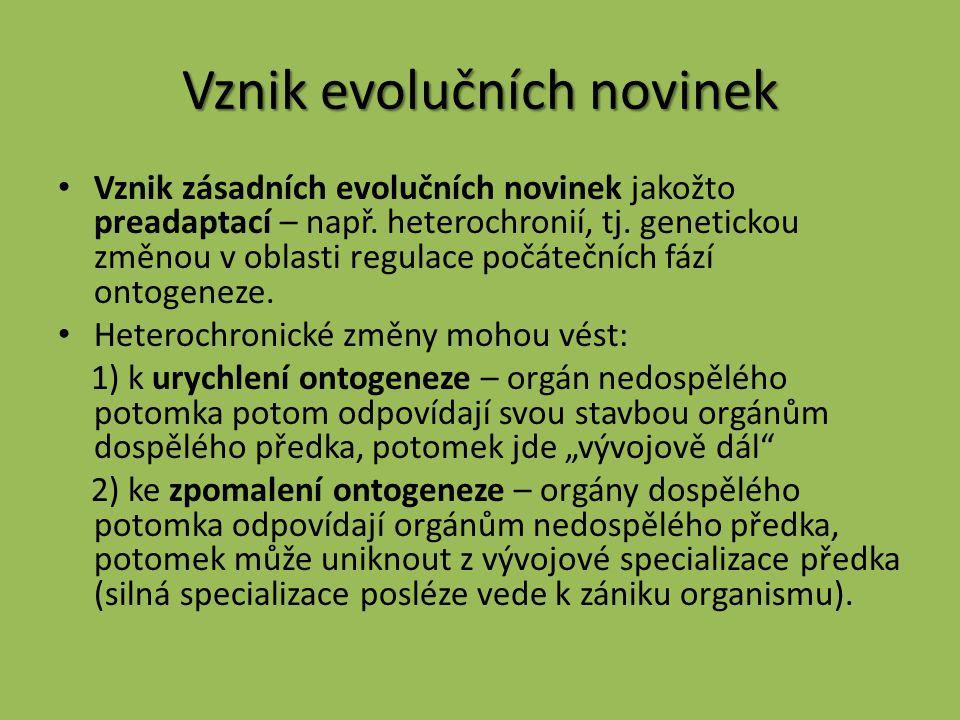 Vznik evolučních novinek Vznik zásadních evolučních novinek jakožto preadaptací – např. heterochronií, tj. genetickou změnou v oblasti regulace počáte