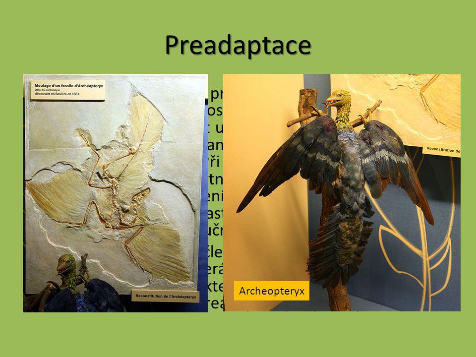 Preadaptace Preadaptace – princip preadaptace spočívá ve vytvoření určité vlastnosti, která v době svého vzniku umožňovala vykonávat určité funkce, an