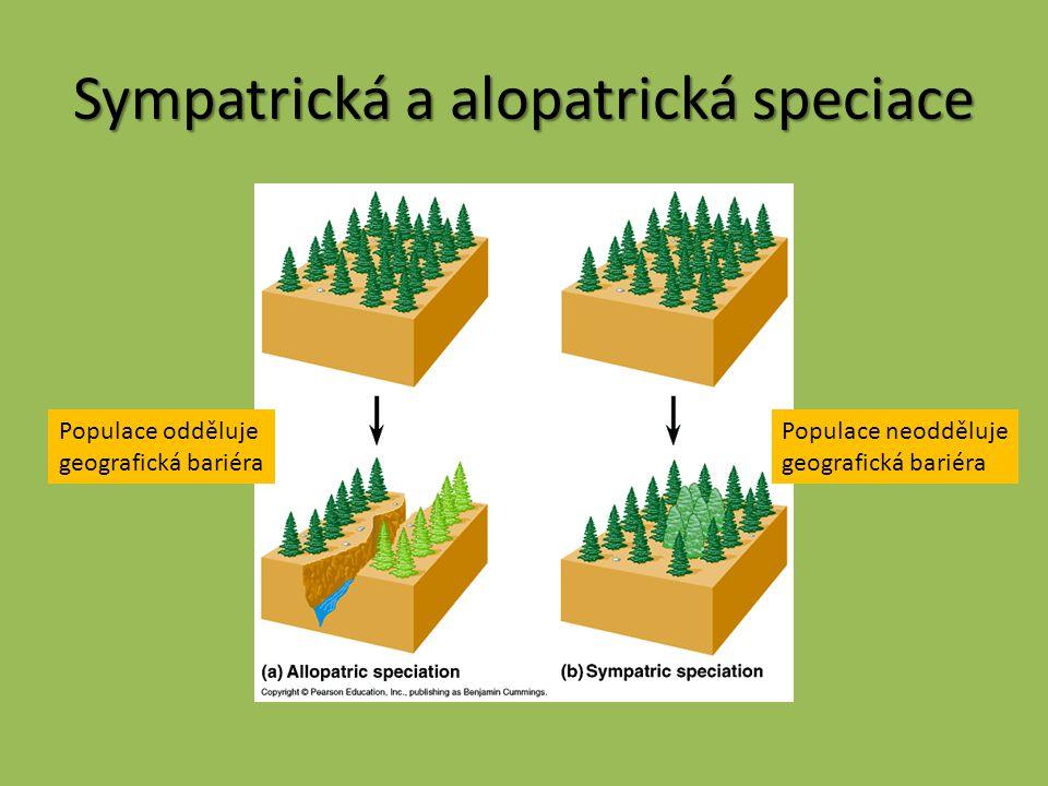 Sympatrická a alopatrická speciace Populace odděluje geografická bariéra Populace neodděluje geografická bariéra