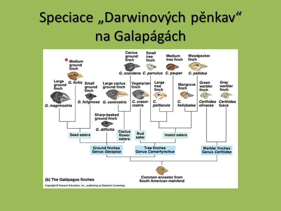 """Speciace """"Darwinových pěnkav"""" na Galapágách"""