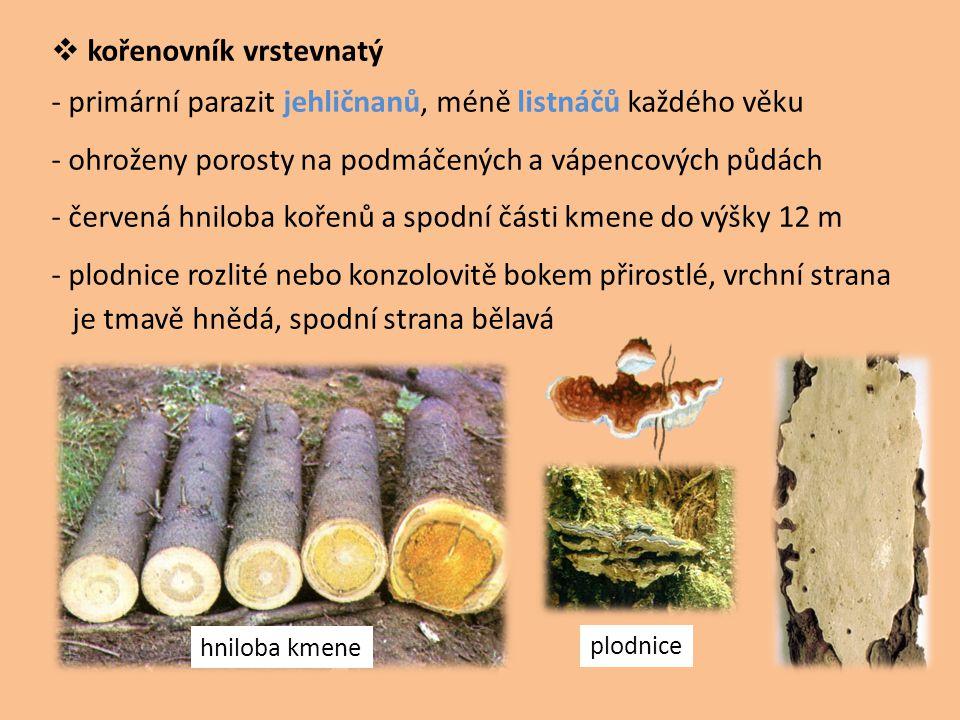  kořenovník vrstevnatý - primární parazit jehličnanů, méně listnáčů každého věku - ohroženy porosty na podmáčených a vápencových půdách - červená hni