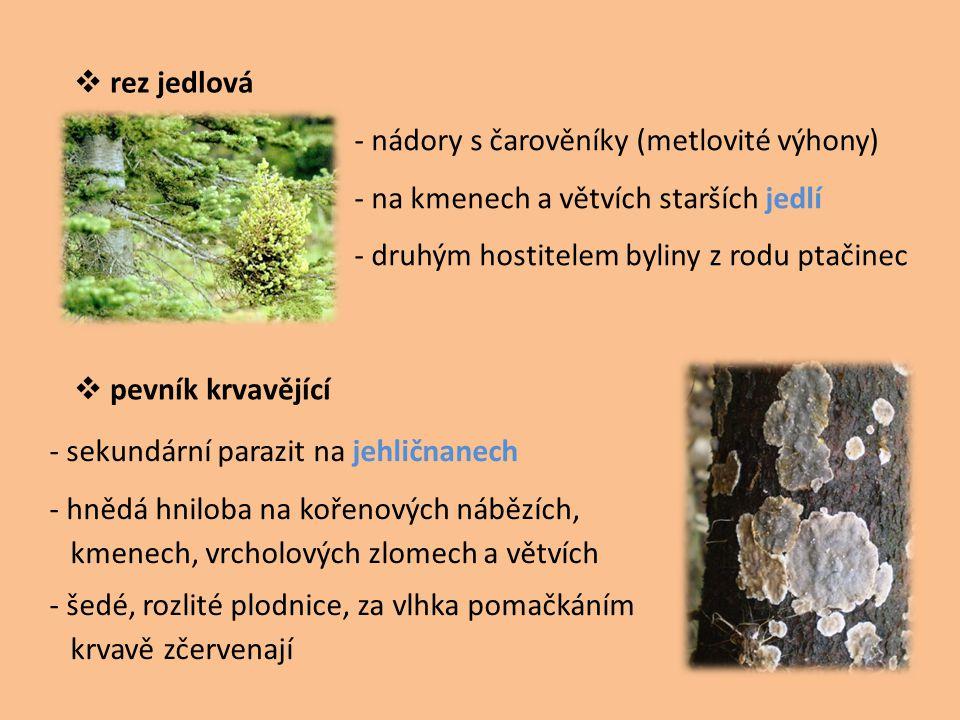  rez jedlová  pevník krvavějící - nádory s čarověníky (metlovité výhony) - na kmenech a větvích starších jedlí - druhým hostitelem byliny z rodu pta