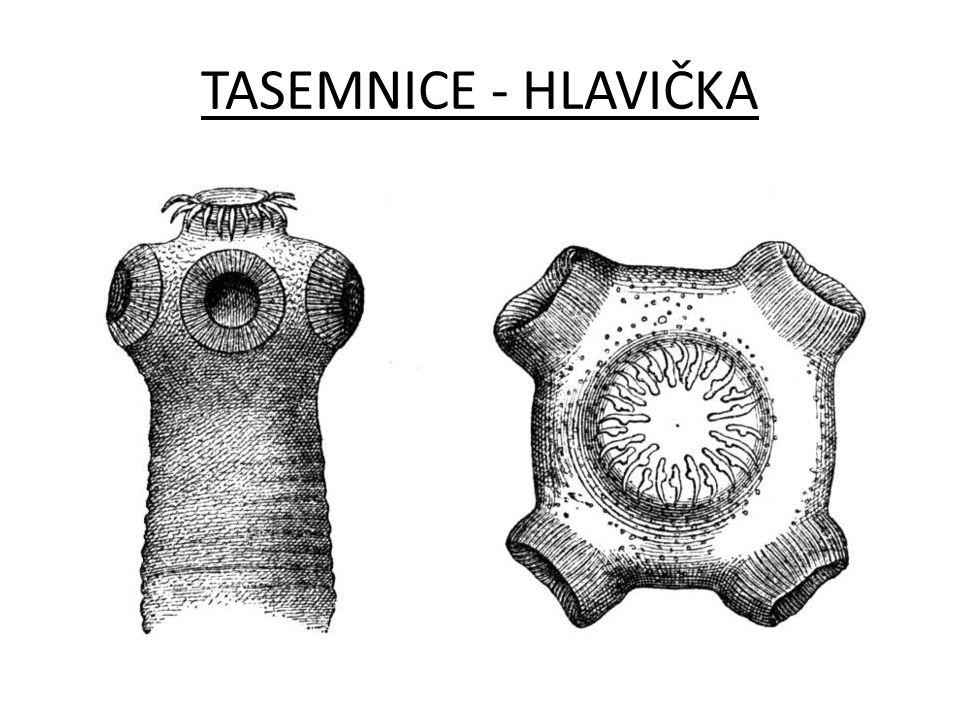 TASEMNICE - HLAVIČKA
