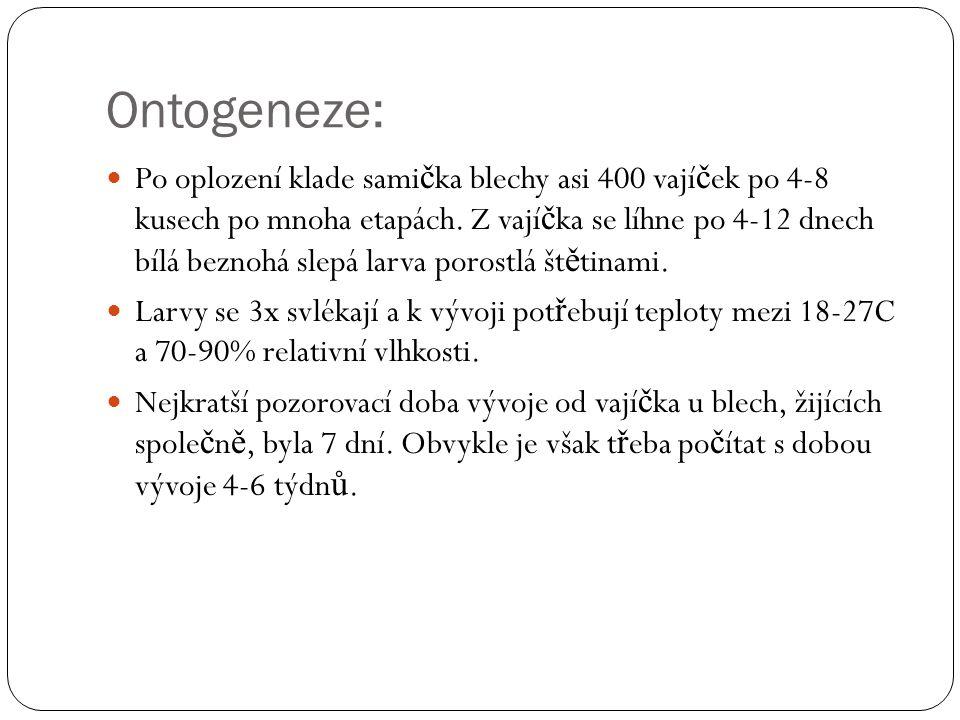 Ontogeneze: Po oplození klade sami č ka blechy asi 400 vají č ek po 4-8 kusech po mnoha etapách. Z vají č ka se líhne po 4-12 dnech bílá beznohá slepá