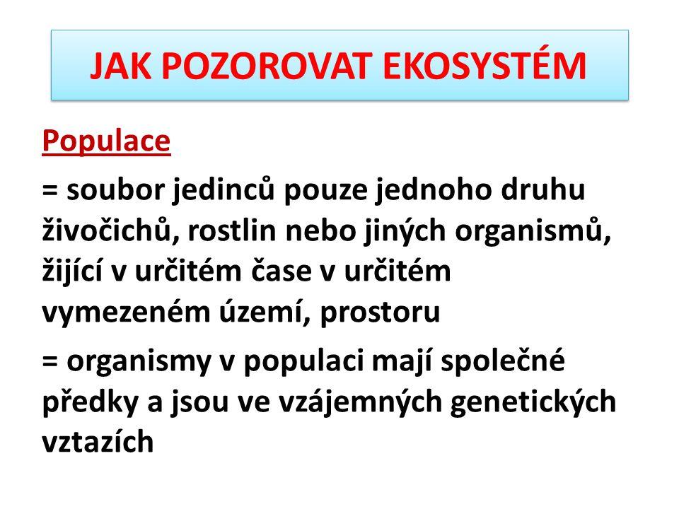 Sekundární konzumenti = získávají energii a živiny přímým konzumováním heterotrofních organismů – býložravců = bývají proto označováni jako konzumenti 2.
