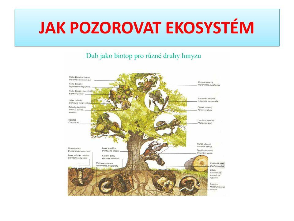 JAK POZOROVAT EKOSYSTÉM Symbiotické organismy = žijí v trvalém, pro oba organismy nezbytném vztahu = výživou se vzájemně doplňují Příklad: lišejníky