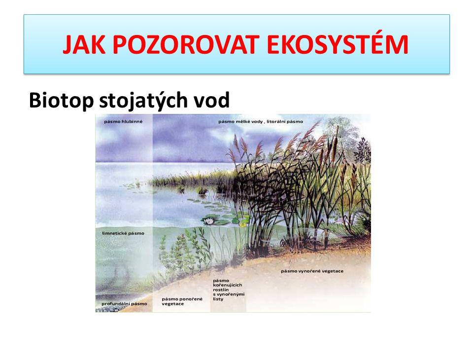 Biotop stojatých vod
