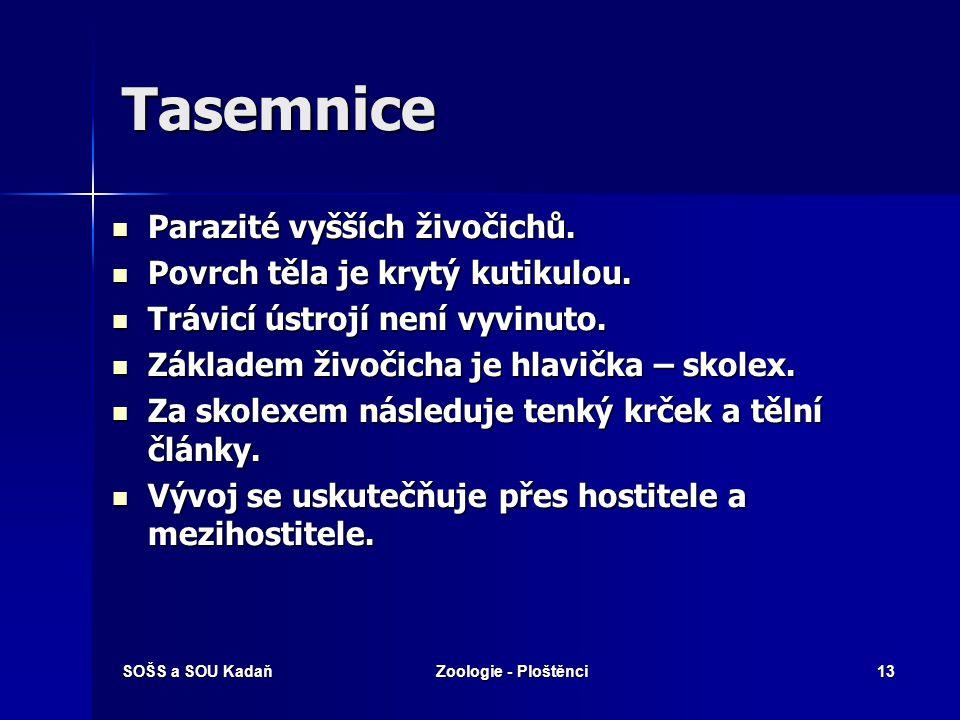 SOŠS a SOU KadaňZoologie - Ploštěnci12 Motolice dvourodé Motolice kopinatá Motolice kopinatá Vývoj probíhá přes mezihostitele - plž a mravenec. Vývoj