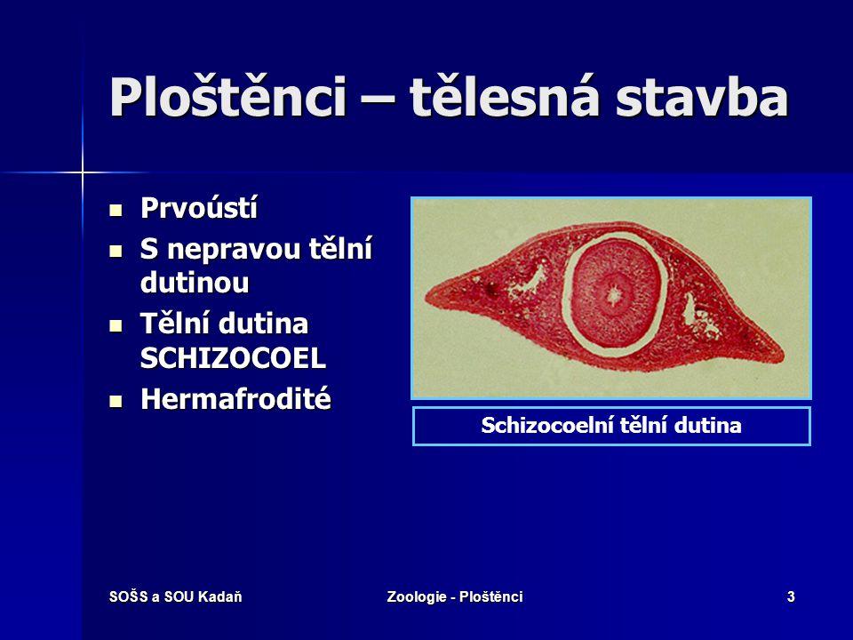 SOŠS a SOU KadaňZoologie - Ploštěnci3 Ploštěnci – tělesná stavba Prvoústí Prvoústí S nepravou tělní dutinou S nepravou tělní dutinou Tělní dutina SCHIZOCOEL Tělní dutina SCHIZOCOEL Hermafrodité Hermafrodité Schizocoelní tělní dutina