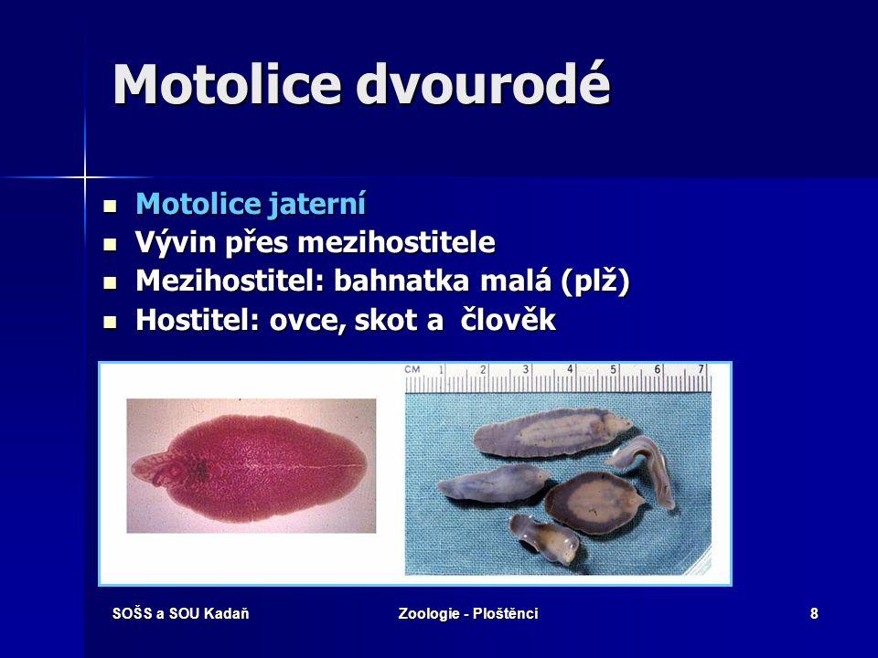 SOŠS a SOU KadaňZoologie - Ploštěnci7 Motolice jednorodé Žabrohlíst – parazit kaprovitých ryb Žabrohlíst – parazit kaprovitých ryb