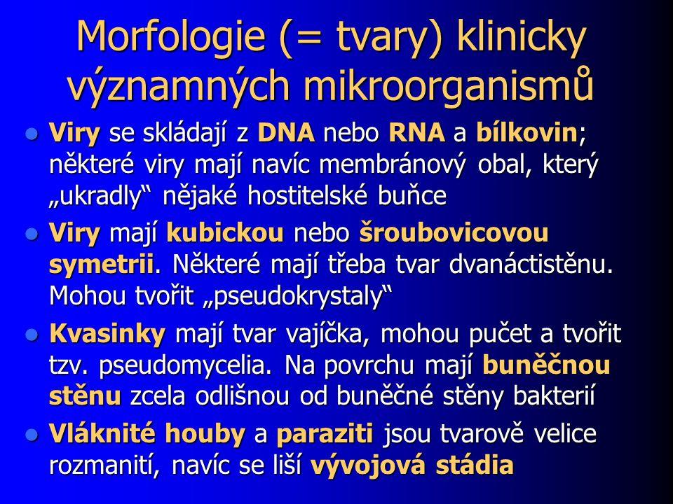 """Morfologie (= tvary) klinicky významných mikroorganismů Viry se skládají z DNA nebo RNA a bílkovin; některé viry mají navíc membránový obal, který """"uk"""