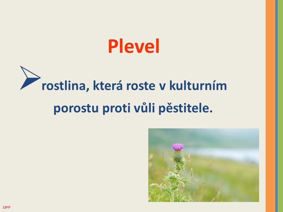 Plevel  rostlina, která roste v kulturním porostu proti vůli pěstitele. MPP