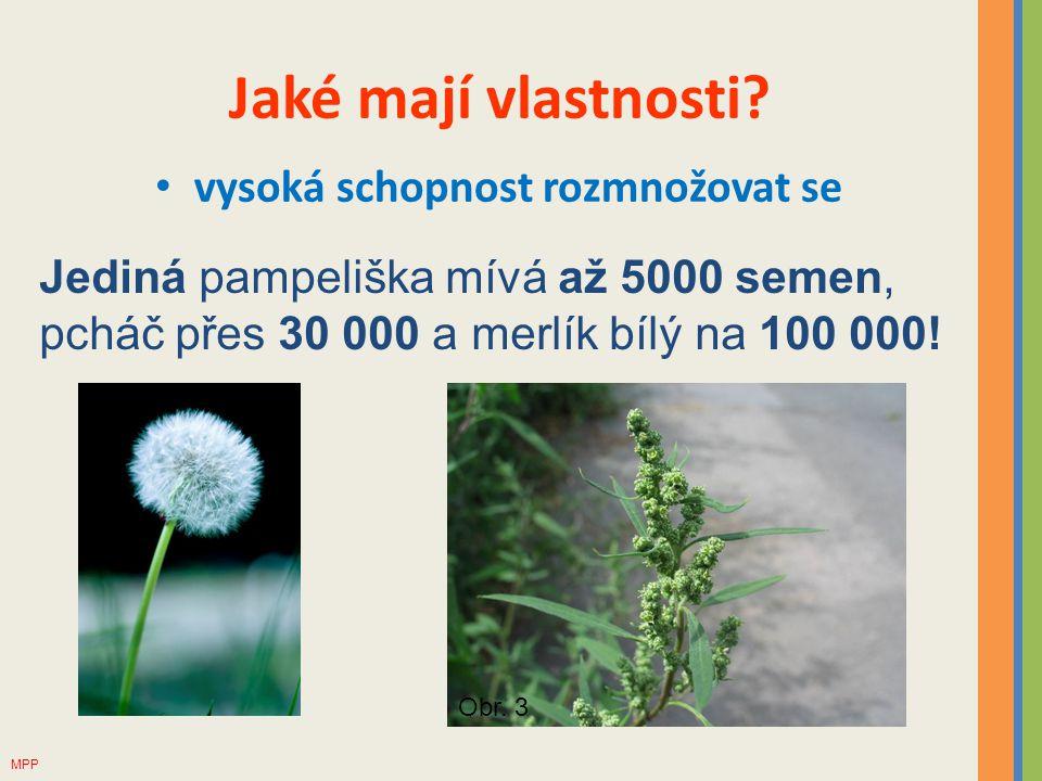 Jaké mají vlastnosti? vysoká schopnost rozmnožovat se Jediná pampeliška mívá až 5000 semen, pcháč přes 30 000 a merlík bílý na 100 000! Obr. 3 MPP
