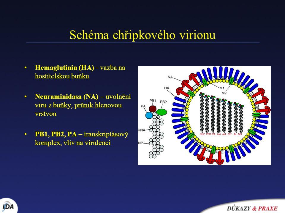 Schéma chřipkového virionu Hemaglutinin (HA) - vazba na hostitelskou buňku Neuraminidasa (NA) – uvolnění viru z buňky, průnik hlenovou vrstvou PB1, PB2, PA – transkriptásový komplex, vliv na virulenci