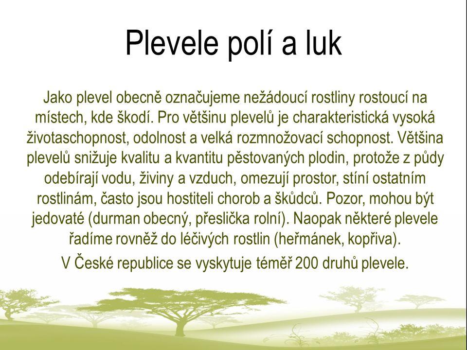 Příklady Kopřiva dvoudomá Vlčí mák [cit.2011-15-07].