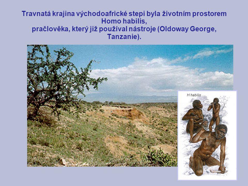 Travnatá krajina východoafrické stepi byla životním prostorem Homo habilis, pračlověka, který již používal nástroje (Oldoway George, Tanzanie).