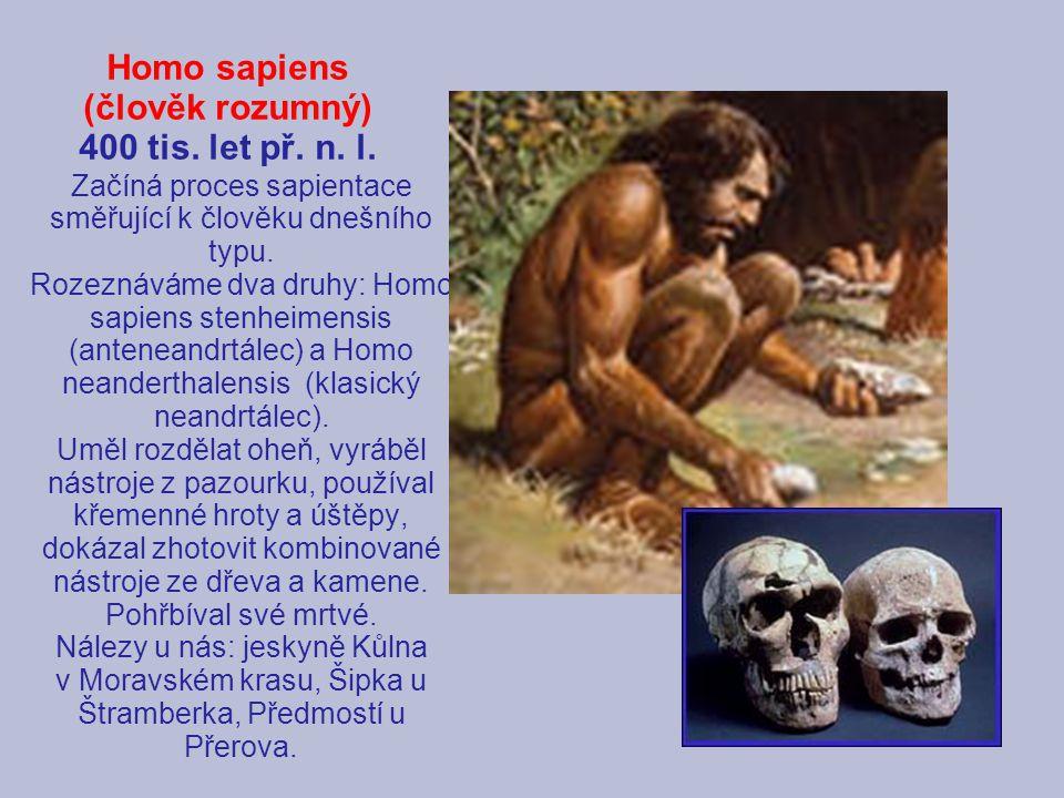 Homo sapiens (člověk rozumný) 400 tis. let př. n. l. Začíná proces sapientace směřující k člověku dnešního typu. Rozeznáváme dva druhy: Homo sapiens s