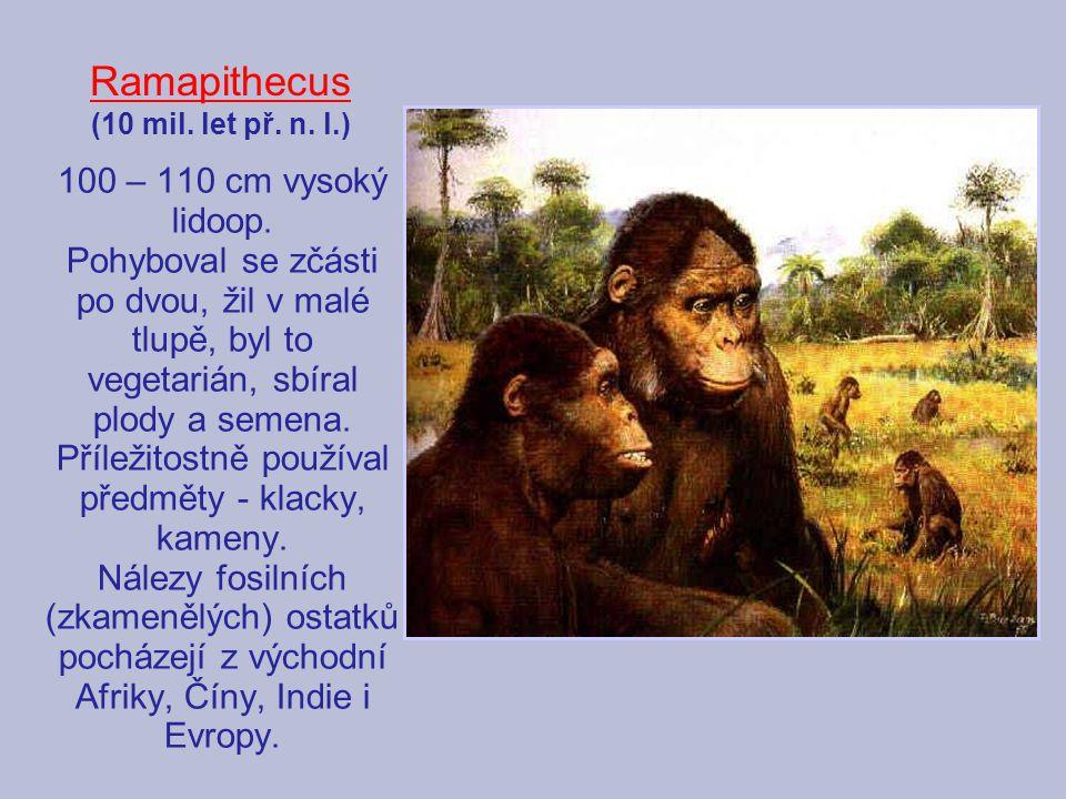 100 – 110 cm vysoký lidoop. Pohyboval se zčásti po dvou, žil v malé tlupě, byl to vegetarián, sbíral plody a semena. Příležitostně používal předměty -