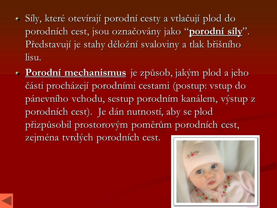 """Síly, které otevírají porodní cesty a vtlačují plod do porodních cest, jsou označovány jako """"porodní síly"""". Představují je stahy děložní svaloviny a t"""