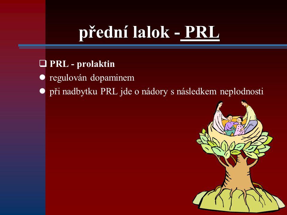 přední lalok - PRL  PRL - prolaktin regulován dopaminem při nadbytku PRL jde o nádory s následkem neplodnosti