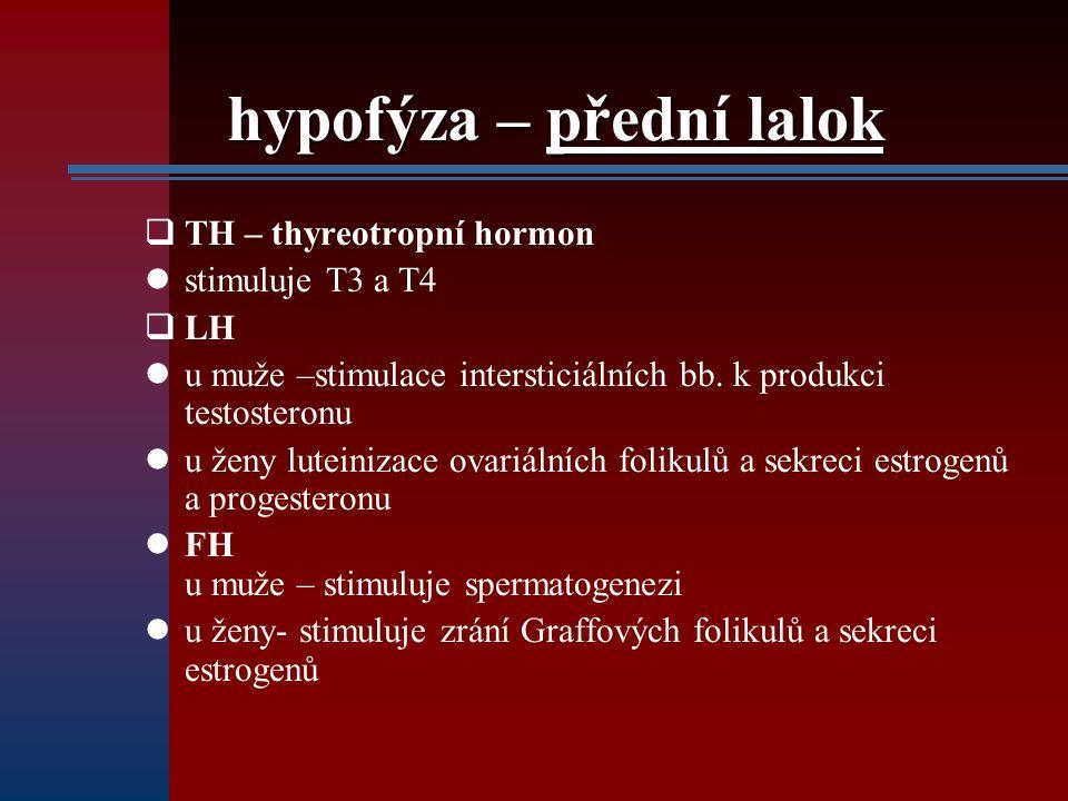 hypofýza – přední lalok  TH – thyreotropní hormon stimuluje T3 a T4  LH u muže –stimulace intersticiálních bb. k produkci testosteronu u ženy lutein