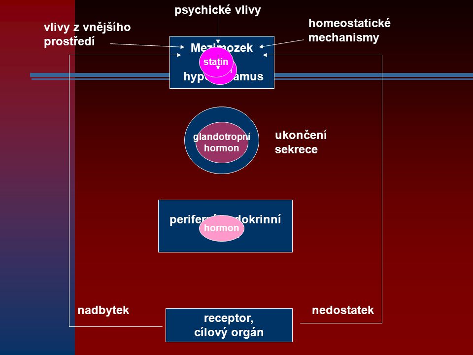 Mezimozek hypothalamus psychické vlivy vlivy z vnějšího prostředí homeostatické mechanismy hypofýza periferní endokrinní žláza glandotropní hormon rec