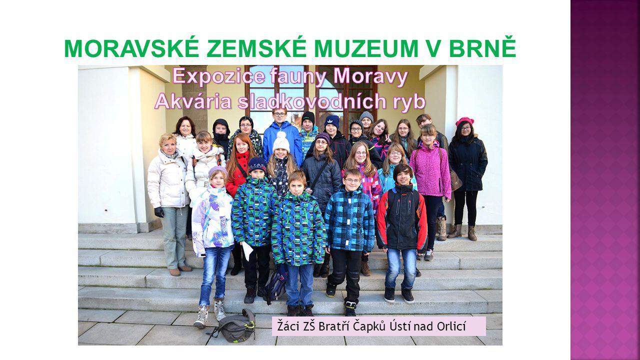 Žáci ZŠ Bratří Čapků Ústí nad Orlicí