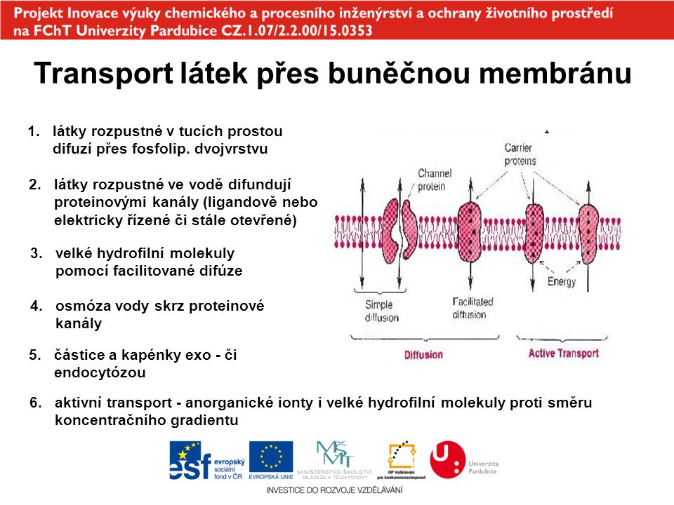 Transport látek přes buněčnou membránu 1.látky rozpustné v tucích prostou difuzí přes fosfolip. dvojvrstvu 2.látky rozpustné ve vodě difundují protein