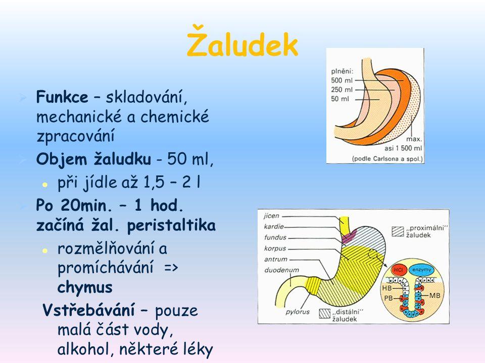 Žaludek   Funkce – skladování, mechanické a chemické zpracování   Objem žaludku - 50 ml, při jídle až 1,5 – 2 l   Po 20min. – 1 hod. začíná žal.