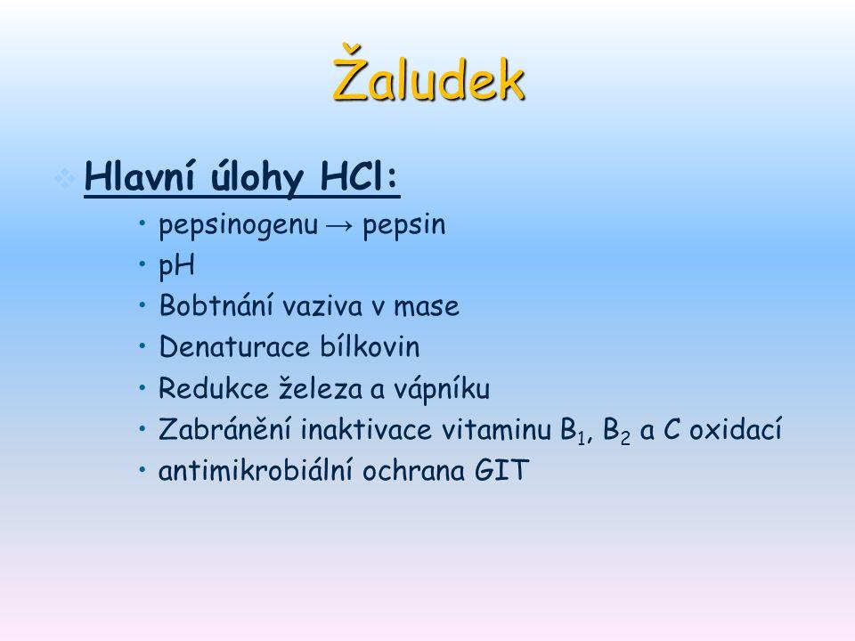 Žaludek   Hlavní úlohy HCl: pepsinogenu → pepsin pH Bobtnání vaziva v mase Denaturace bílkovin Redukce železa a vápníku Zabránění inaktivace vitamin